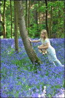 Description: Annabella Bluebells Tree 2011